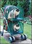 Cat stoller